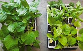 Plant Food Dont Forget To Feed Your Plants Gardeners Supply