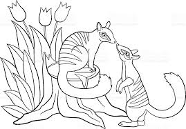 Small Picture Coloring Pages Two Little Cute Numbats Look At Each Other stock