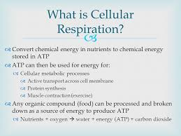 anaerobic processes of cellular respiration and interpret 2 convert chemical