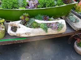 Driftwood planter planted with succulents