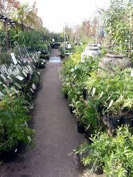 garden shops geelong. wombat gully plants, geelong garden shops