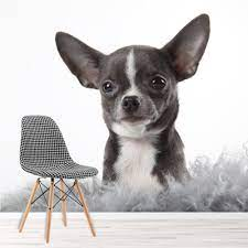 Chihuahua Puppy Dog Wall Mural Wallpaper