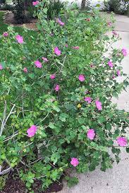 full sun flowering perennials for zones