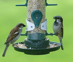 24 Best Birds In Our Yard Images On Pinterest  Beautiful Birds Backyard Birds Pacific Northwest