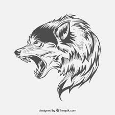 gray wolf face drawing. Beautiful Drawing Wolf Sideface For Gray Face Drawing R