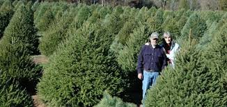 Christmas Tree Farms Tennessee  Home Decorating Interior Design Local Christmas Tree Lots
