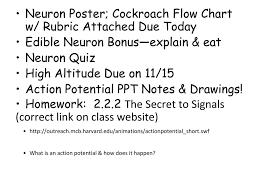 Flow Chart Rubric Neuron Poster Cockroach Flow Chart W Rubric Attached Due