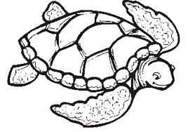 Small Picture green turtle coloring pages animal 5 35 Gianfredanet