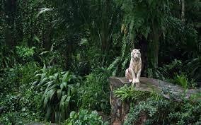 White Tiger In The Jungle Wallpaper ...