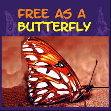 Image result for free as a butterfly