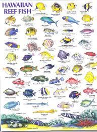 Oahu Fish Chart Hawaiian Reef Fish Guide Grew Up Swimming Bamboo Fishing