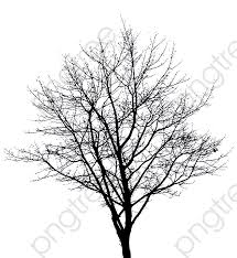Tree Branches Download Free Clipart With A Transparent Background