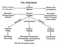 The Kingdom System Of Organisms Classification Top 6 Concepts