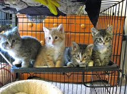 hundreds of cats. Fine Cats Authorities In Vietnam Ran Over Hundreds Of Cats With A Dump Truck  VICE To Of R