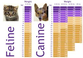 Dog Chart For Age Age In Pets Beyond Dog Years Pet Nanny