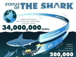 hammerhead shark facts for kids. Delighful Hammerhead Throughout Hammerhead Shark Facts For Kids