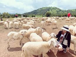 Đồi cừu Vũng Tàu hướng dẫn đường đi và thông tin tham quan chi tiết