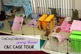 guinea pig c c fleece cage tour