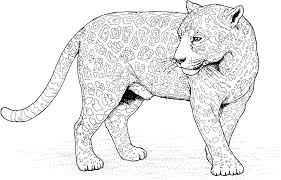 Big Cat Coloring Page Tagged With Detailed Animal Coloring Pages