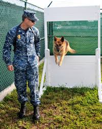 u s department of defense photo essay  navy petty officer 2nd class justin sosa directs hopski a military working dog over