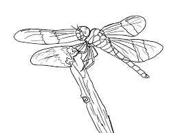 Small Picture Inspiring Dragonfly Coloring Pages Pefect Colo 5584 Unknown
