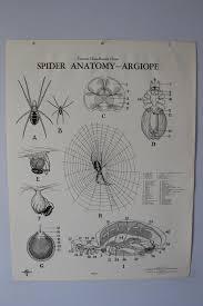 Spider Anatomy Chart Vintage Argiope Spider Anatomy Classroom Chart From Turtox