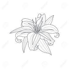 予約手描きベクトル シンプルなスタイルのイラストを着色するためのユリの花白黒図面
