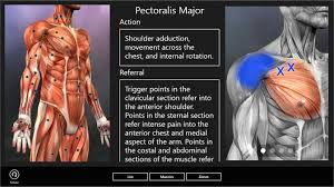 Free Trigger Point Chart Buy Muscle Trigger Points Microsoft Store