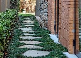 A grama esmeralda é indicada para que tipo de jardim? Grama Preta O Que E Precos Como Cultivar E 64 Fotos