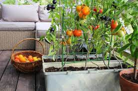 small space gardening ideas for growing