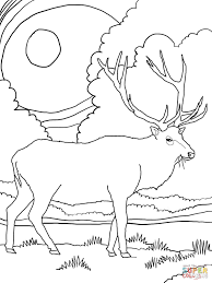 Small Picture Rocky Mountain Elk coloring page Free Printable Coloring Pages