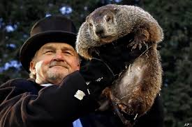 Image result for images of a groundhog