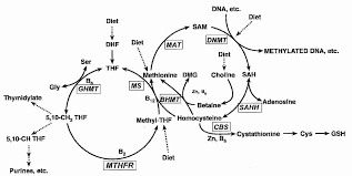Alcohol Metabolism Chart Alcohol Metabolism Chart