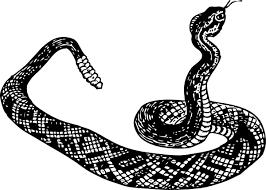 rattlesnake clipart. Simple Rattlesnake Rattle Snake Clip Art  Vector Online Royalty Free Throughout Rattlesnake Clipart R