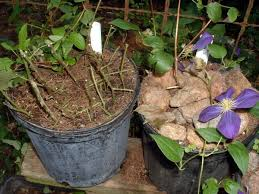 how to keep squirrels out of garden. Stop Squirrels From Digging In Potted Plants How To Keep Out Of Garden