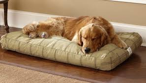 5 Dog Beds That Will Have Your Dog Dreaming