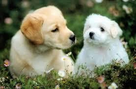 Beste schattige baby dieren kleurplaat kleurplaat 2019. Latest Project Kleurplaten Dieren Puppy Puppies Honden Tekeningen Hond Tekeningen Honden Dieren