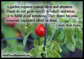 Quote Garden Delectable Today's Harvest From The Quote Garden 48 The Small Town Homestead