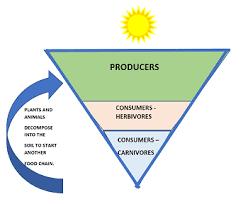 food web pyramid wetlands food web lesson for kids study com