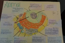 animal cell project poster. Simple Cell Animal Cell Project Poster  Photo3 And Cell Project Poster A