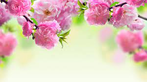 Spring flowers wallpaper ...