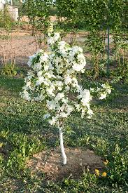 How Deep To Plant Fruit Trees U2013 All Things GreenWhen Do You Plant Fruit Trees