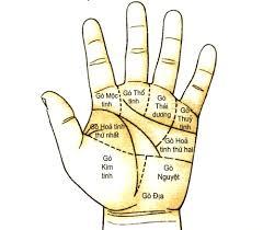 Tìm hiểu hàm nghĩa của 9 gò trên lòng bàn tay - Daktra