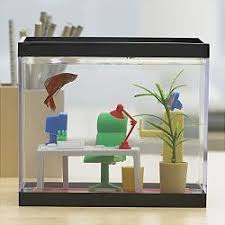 fish tank in office. article image office fish tank in a