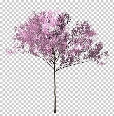 Bunga Sakura Cherry Blossom Tree Twig Bunga Sakura Png Clipart Free
