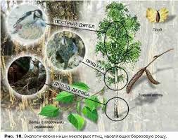 Реферат Природные экосистемы Лесная подстилка березовой рощи образована продуктами разложения опавших листьев мелких веточек кусков коры опада сухой травы и трупов мелких жизненных
