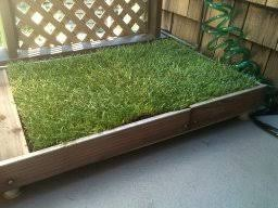 dogs bathroom grass. amazon.com : fresh patch disposable dog potty with real grass - as seen on dogs bathroom a