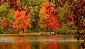 Fall Trees Wallpaper Desktop ...
