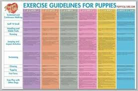 Exercise Guidelines For Puppies From Puppy Culture