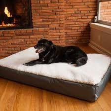 Image of: Best Sherpa Dog Bed